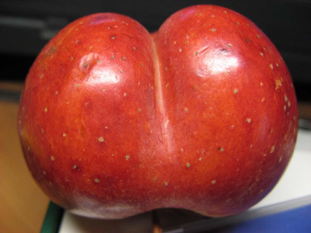 """фото """"и среди фруктов попадаются такие ...!"""" метки: ,"""