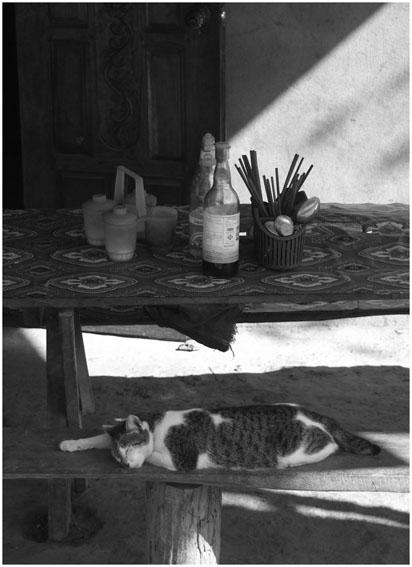 """фото """"***"""" метки: путешествия, природа, Азия, домашние животные"""