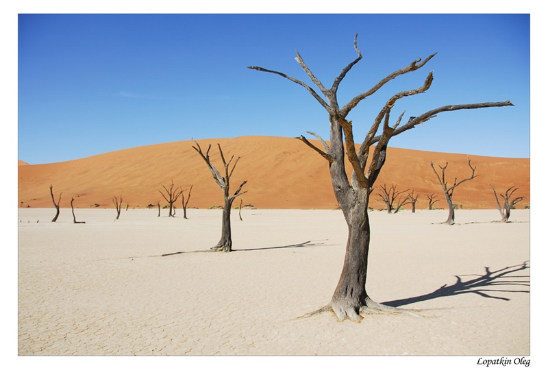 "photo ""Dead vlei 3"" tags: travel, Africa"