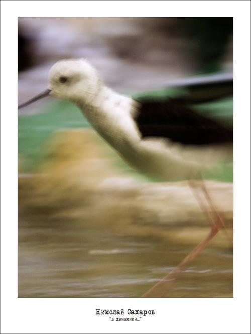 """фото """"...в движении..."""" метки: природа, дикие животные"""