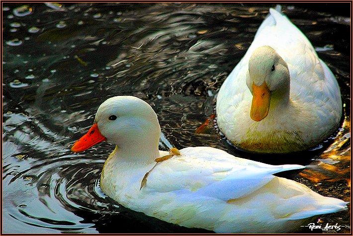"photo ""nice pair"" tags: nature, travel, pets/farm animals"