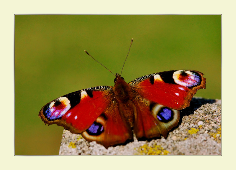 "photo ""Butterfly"" tags: macro and close-up,"