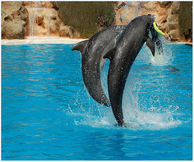 "photo ""Dolfin show"" tags: nature, reporting, wild animals"