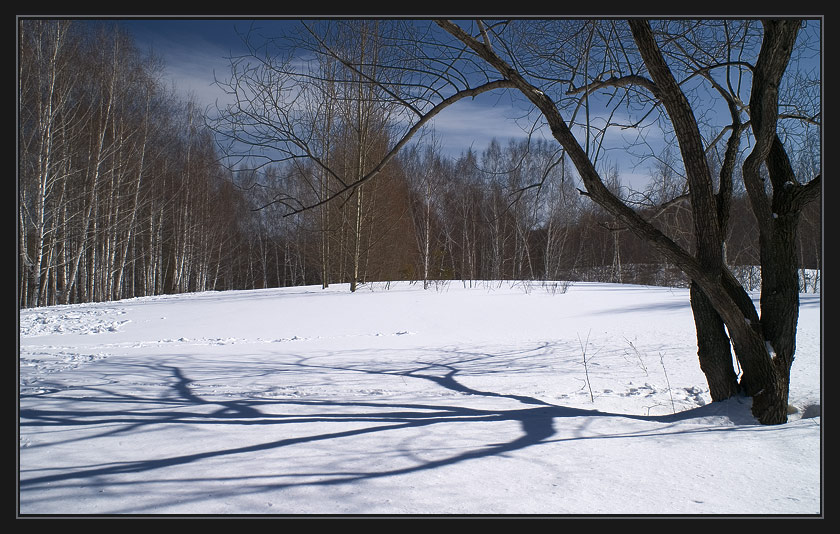 "photo ""Winter, trees, shadows - 1"" tags: landscape, winter"
