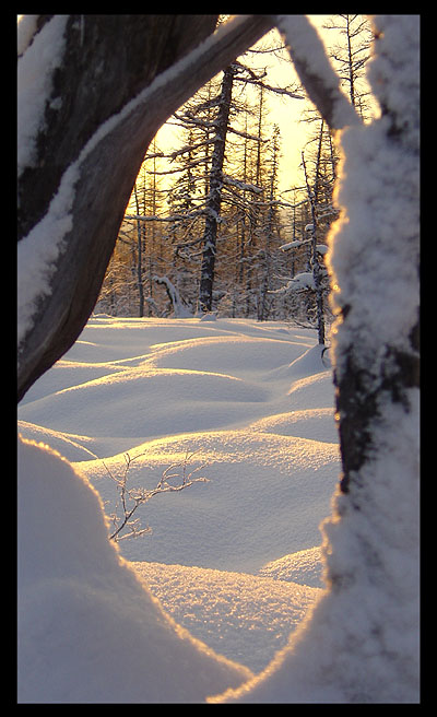 """photo """"***"""" tags: landscape, forest, winter"""