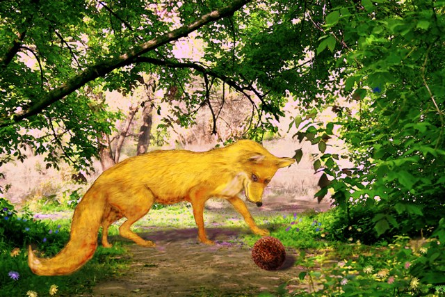 "photo ""Fox and Prickly"" tags: montage, misc.,"