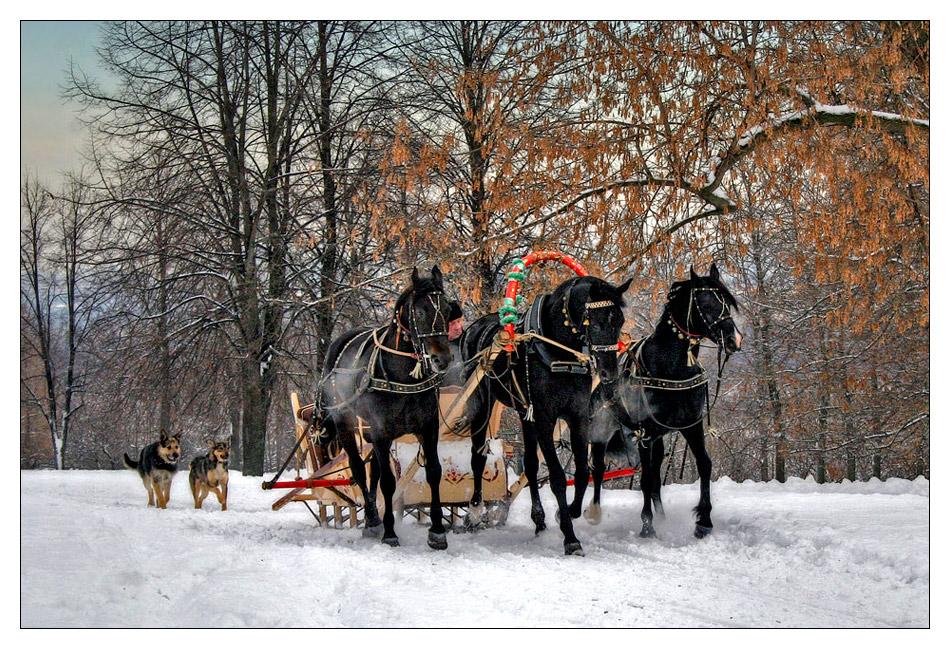 """фото """"Другая тройка))"""" метки: жанр, пейзаж, зима"""