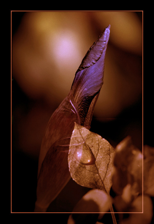 "фото ""DELIRIUM"" метки: природа, цветы"