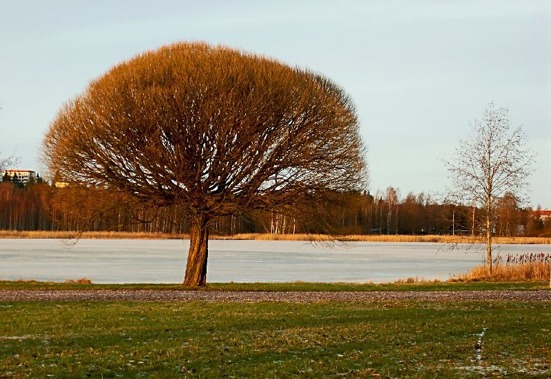 "photo ""The tree in the sun"" tags: landscape, winter"