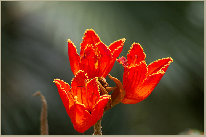 """photo """"Flowers from South"""" tags: nature, macro and close-up, flowers"""