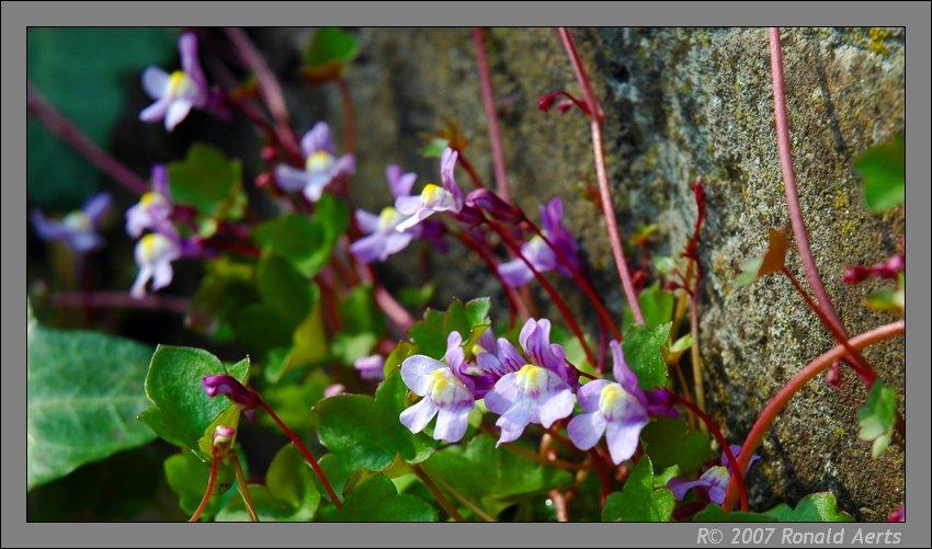 """фото """"Yes!!! it is spring"""" метки: природа, макро и крупный план, цветы"""