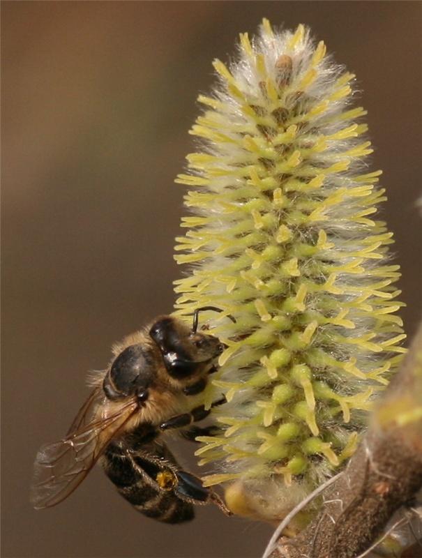 """фото """"Будет вам мёд !"""" метки: природа, макро и крупный план, насекомое"""