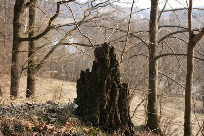 """фото """"Пенечек на вершине склона"""" метки: пейзаж, природа,"""