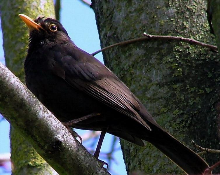 """фото """"Bird I"""" метки: природа, домашние животные"""
