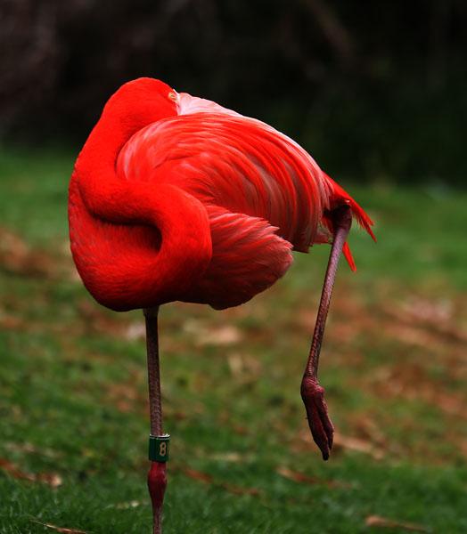 "photo ""10636.b Pink flamingo dreams"" tags: nature, wild animals"