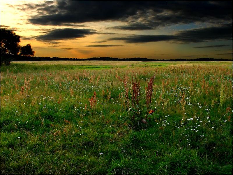 """фото """"Вечер"""" метки: пейзаж, закат, лето"""