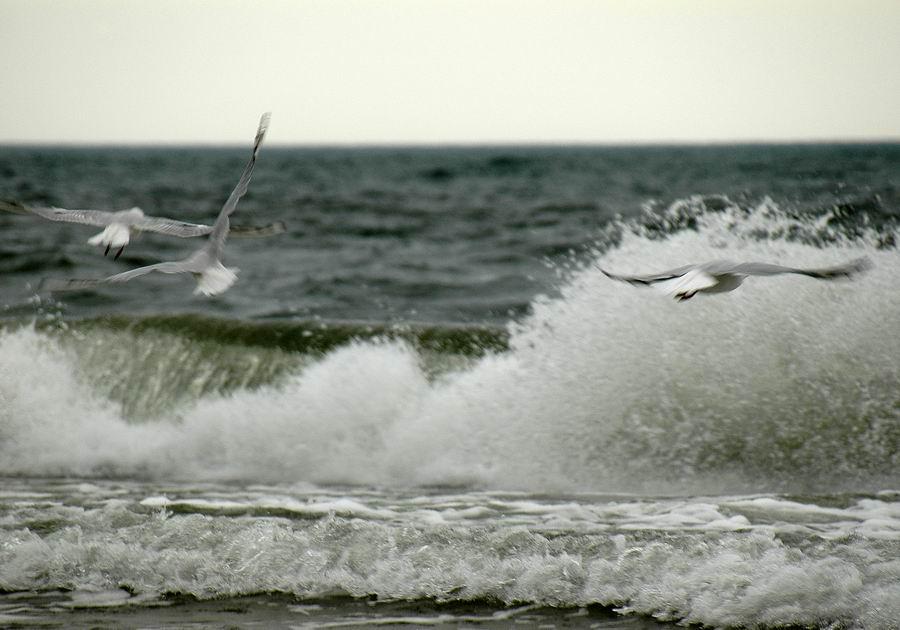 """фото """"Навстречу бури..."""" метки: пейзаж, вода"""