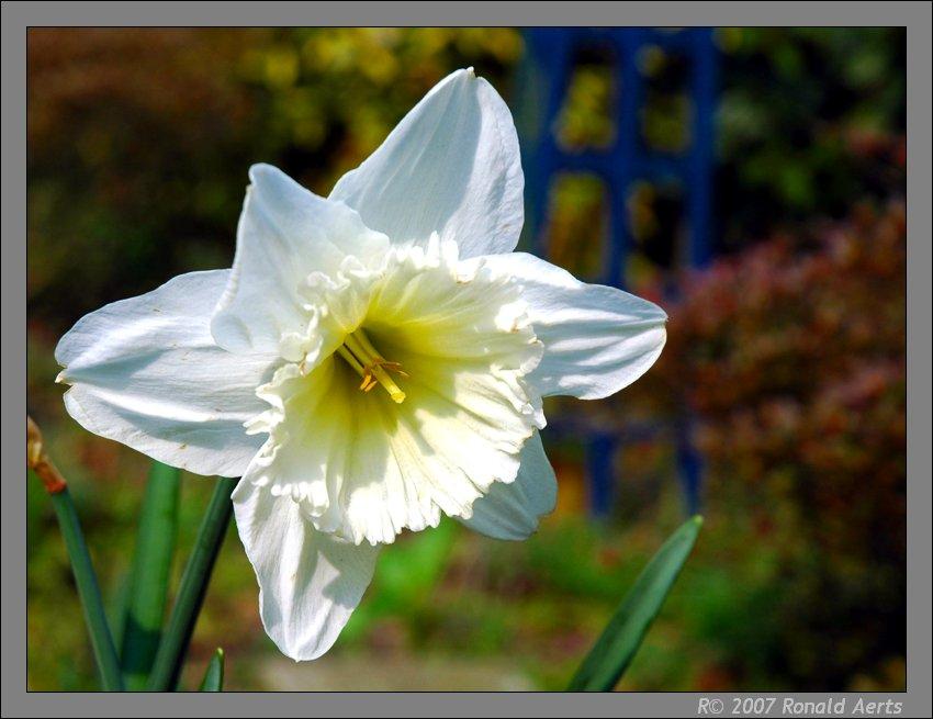 """фото """"Spring"""" метки: природа, макро и крупный план, цветы"""