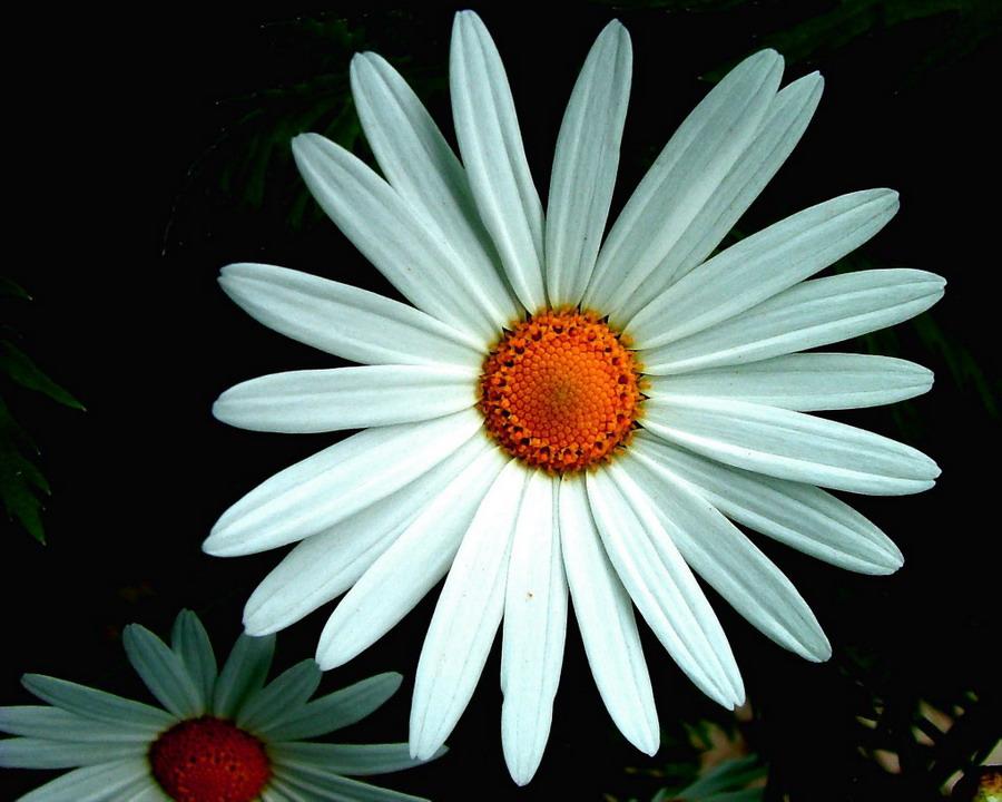 """фото """"Flowers"""" метки: макро и крупный план, природа, цветы"""