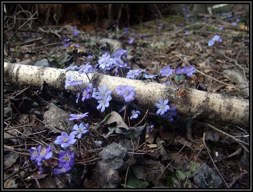 "фото ""Весенняя"" метки: пейзаж, природа, весна, цветы"