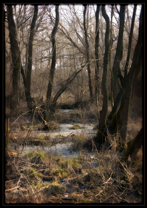 """photo """"***"""" tags: landscape, spring"""