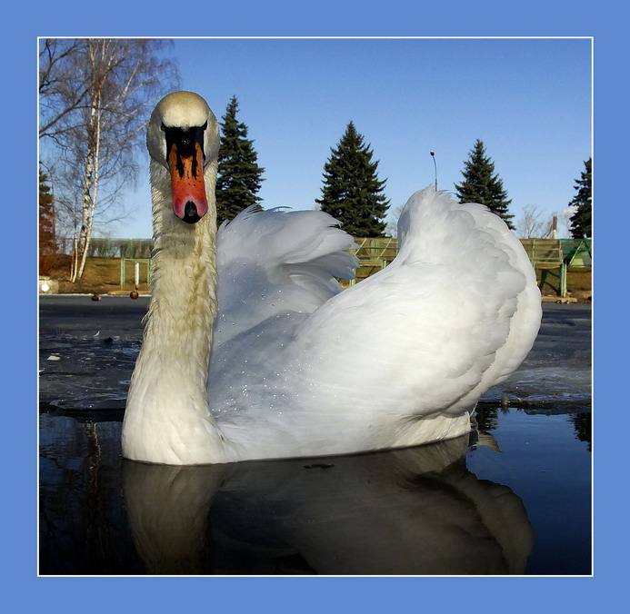 """фото """"Горожанин"""" метки: природа, дикие животные"""