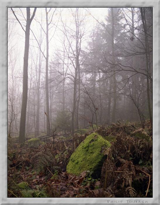 """фото """"Thomb"""" метки: пейзаж, лес, осень"""