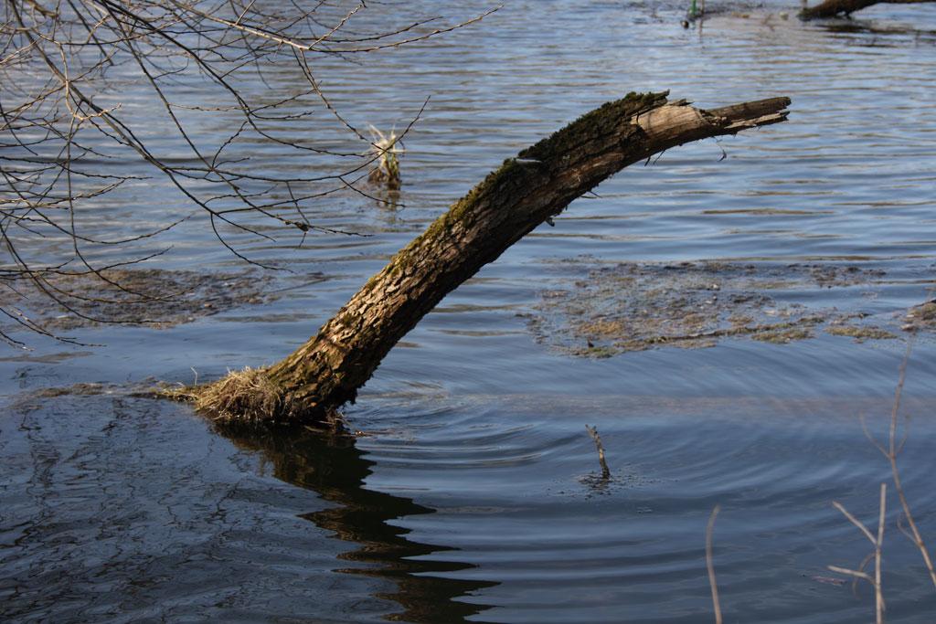 """фото """"Магия воды"""" метки: пейзаж, природа,"""