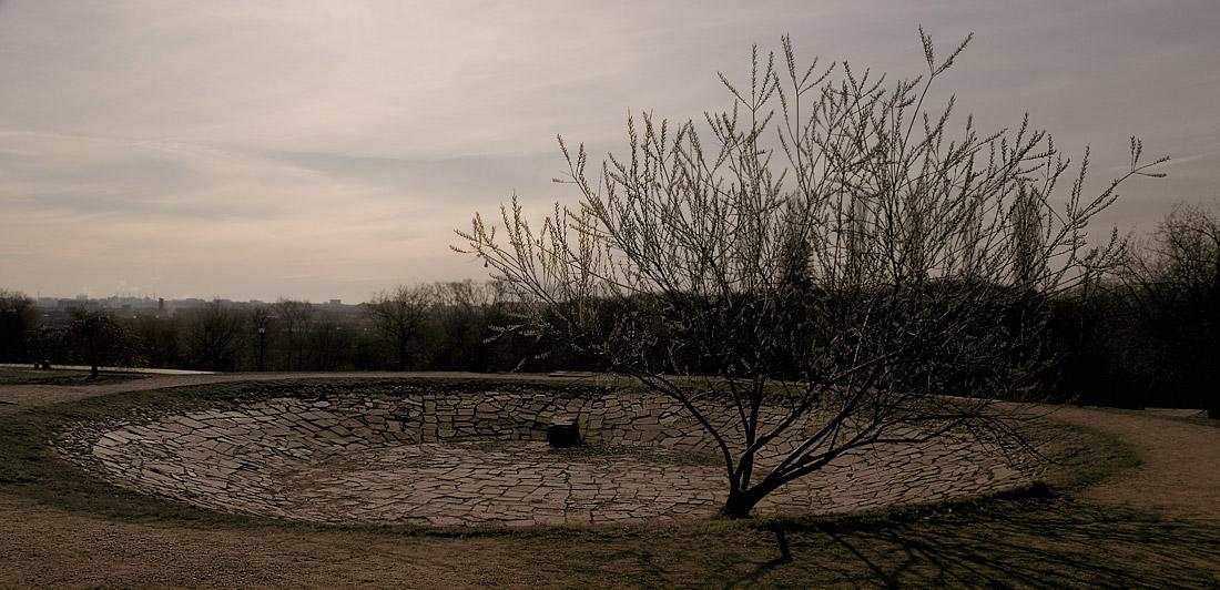 """фото """"And tree grow on stone"""" метки: ,"""