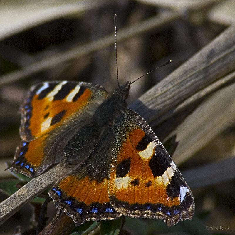 """фото """"На пригреве тепло..."""" метки: природа, макро и крупный план, насекомое"""