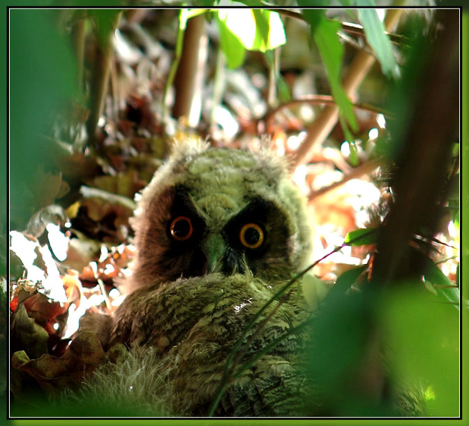 """photo """"Simply  horror"""" tags: nature, wild animals"""