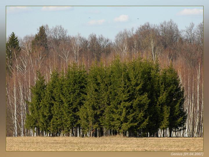 """фото """"Компания"""" метки: пейзаж, лес"""
