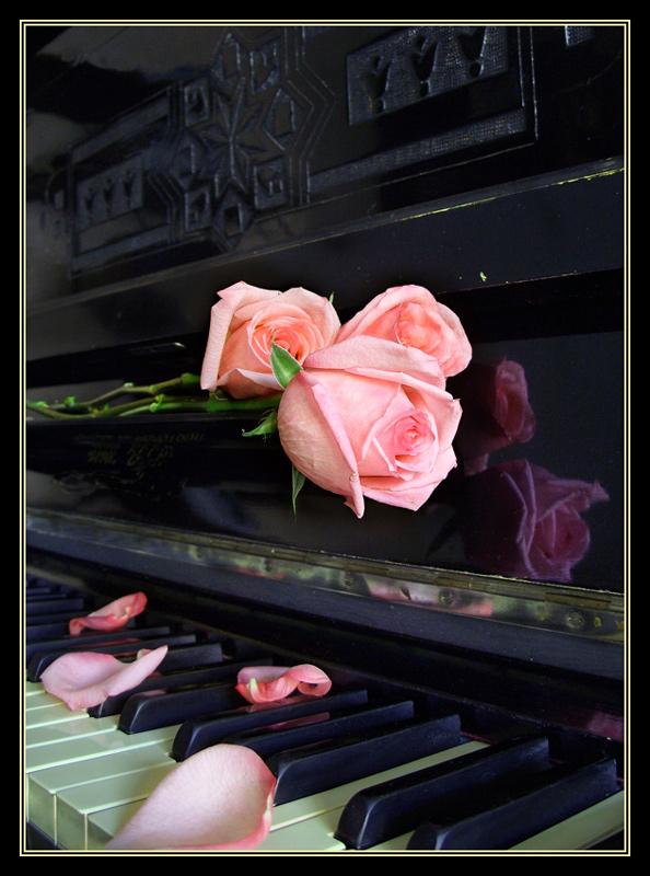 "фото ""Забытая мелодия"" метки: натюрморт, природа, цветы"
