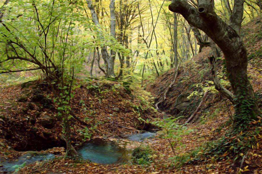 """фото """"Лесной ручей"""" метки: пейзаж, лес"""