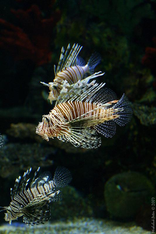 "photo ""Stripy"" tags: underwater,"