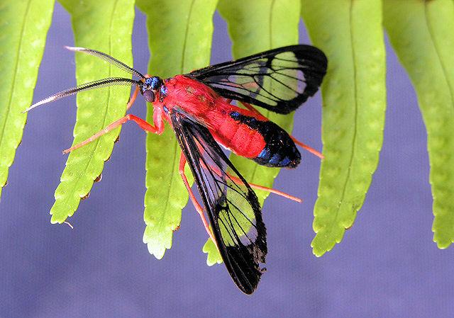 """фото """"moth on fern"""" метки: природа, макро и крупный план, насекомое"""