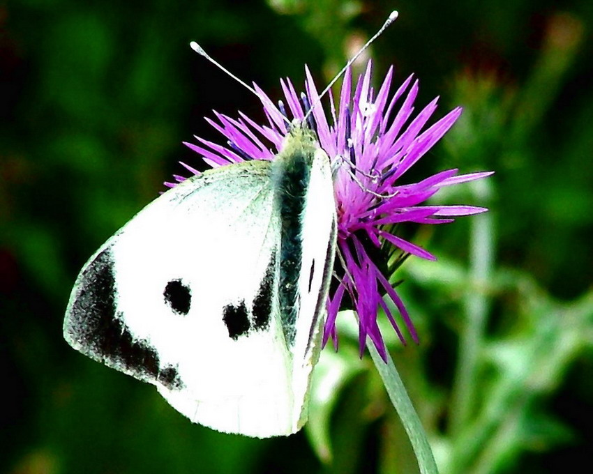 """photo """"Butterfly"""" tags: nature, insect"""