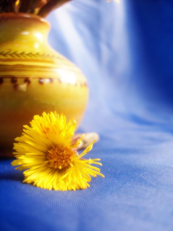 "фото ""Солнышко."" метки: натюрморт, природа, цветы"