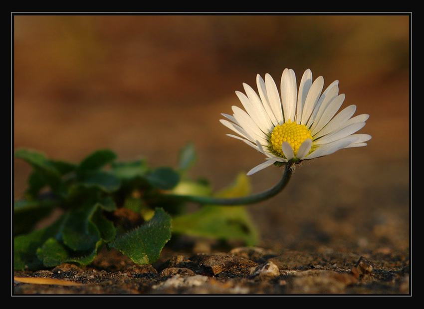 """photo """"***"""" tags: nature, macro and close-up, flowers"""