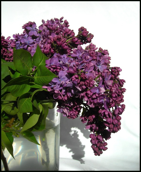 "photo ""Deep Purple"" tags: nature, flowers"