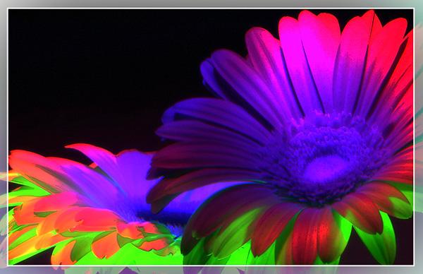 """фото """"Диско"""" метки: природа, цветы"""