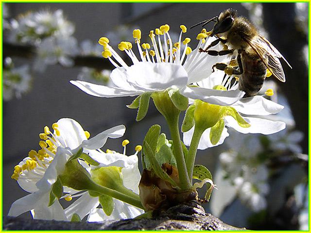 """фото """"Bee"""" метки: природа, макро и крупный план,"""