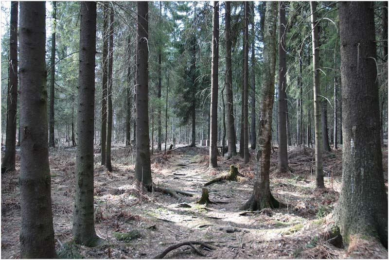 "фото ""лесная тропинка"" метки: пейзаж, лес"