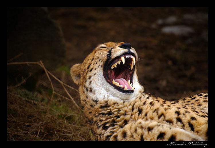 """фото """"morning....good !"""" метки: природа, дикие животные"""