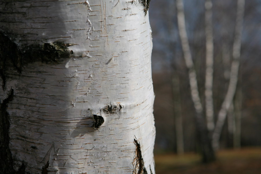 "фото ""Весна"" метки: пейзаж, природа, лес"