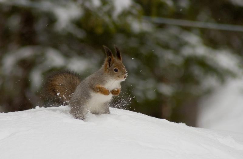 """фото """"***"""" метки: природа, пейзаж, дикие животные, зима"""