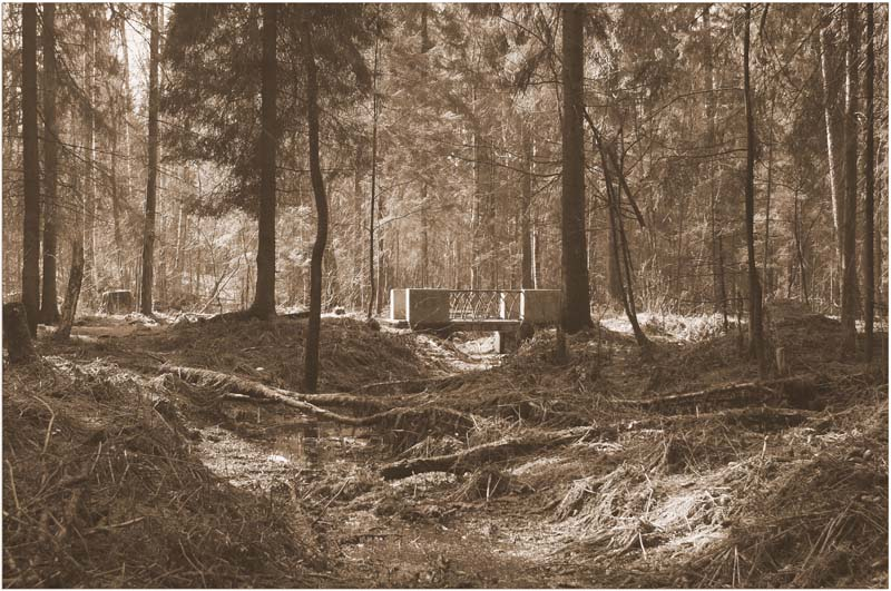 "фото ""место нашей встречи"" метки: пейзаж, лес"