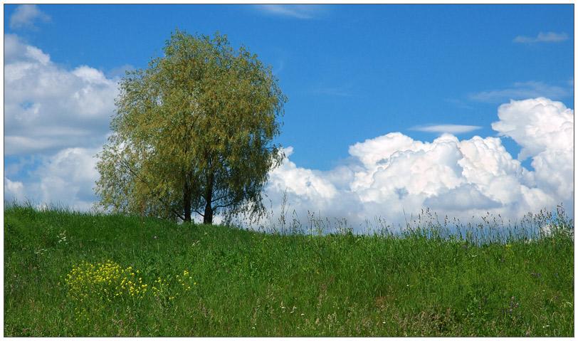 "фото ""Пейзаж с деревом"" метки: пейзаж, лето"