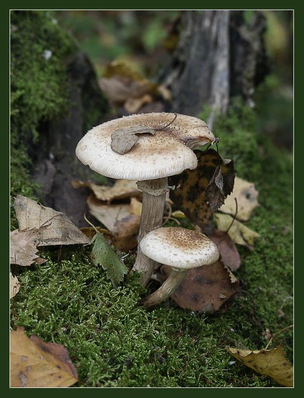 """фото """"Лесные братья"""" метки: природа, цветы"""