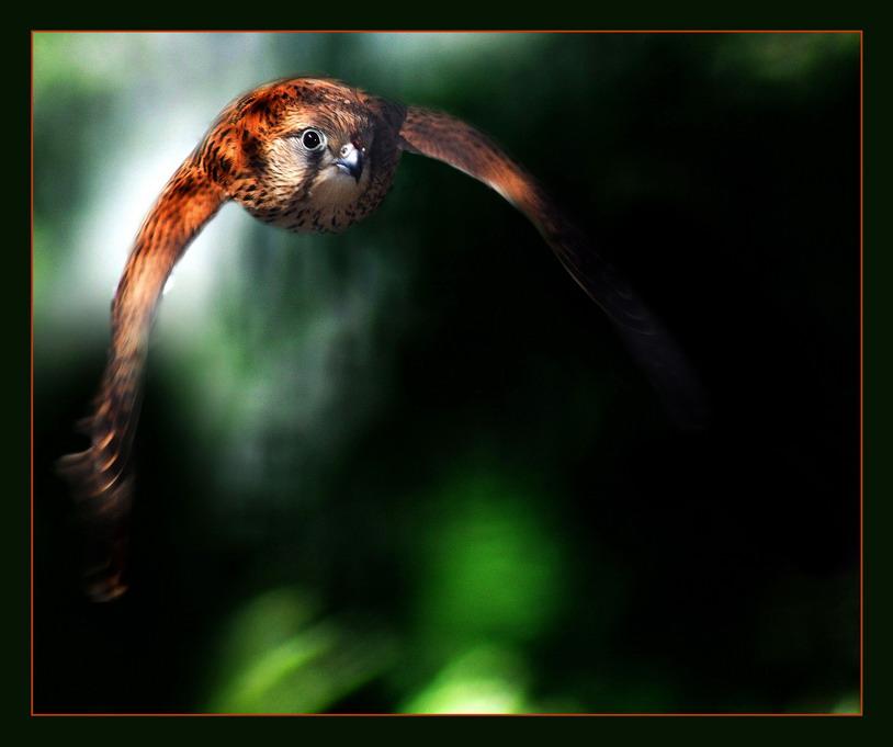 """фото """"Острый глаз"""" метки: природа, дикие животные"""